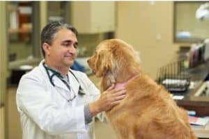 Dr. Jeff Nunez with his patient, a golden retriever.Photo courtesy of Triangle Veterinary Referral Hospitals