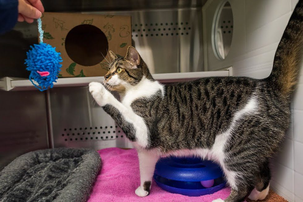 Adopt Whisper at the Animal Protection Society of Durham