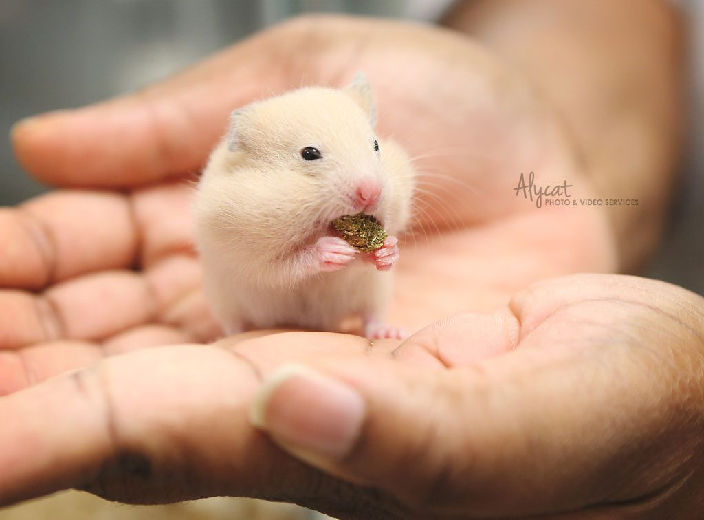 hamster-5