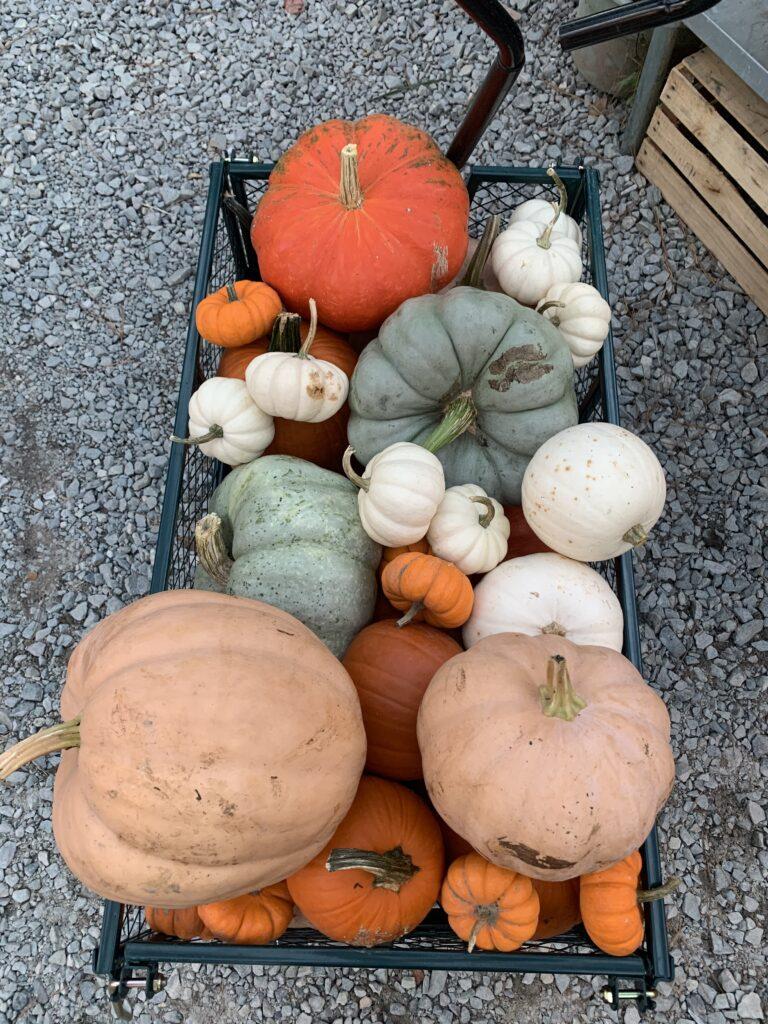 fall events at Perkins Orchard